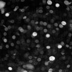 カリスマレンズとの出会い | Summicron 50mm f2.0 Collapsible