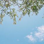 久々の新品レンズ | Canon EF 40mm f2.8 STM