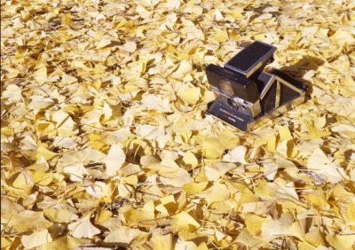 秋はリバーサルの季節